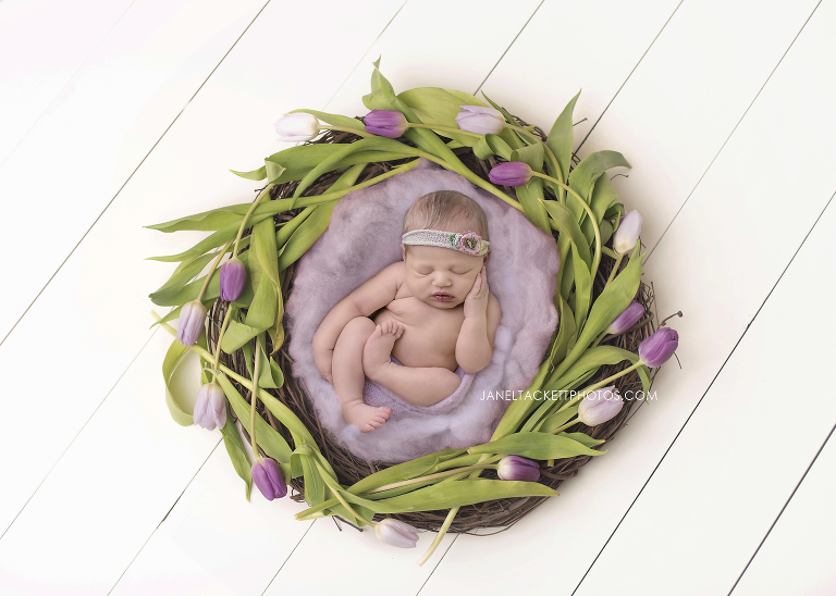newborn tulip nest portrait